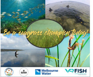 Be a Seagrass Champion in Western Port