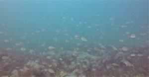 Shellfish Restoration Set to Double!