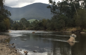 Fish Habitat Works on the Mitta River