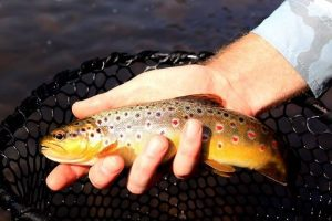 Closed Season for River Trout