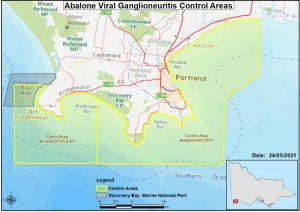 Abalone Disease Controls Still in Force in the South West