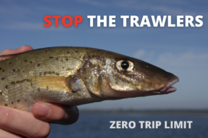 Trawlers Targeting Spawning KGW